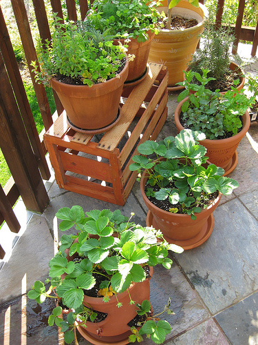 grow a great garden in a small space with a container garden, Natural flower
