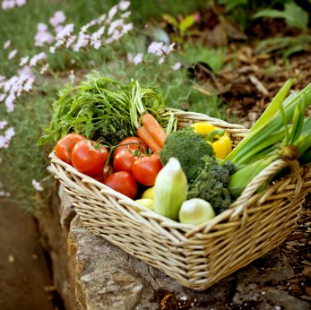 Growing A Vegetable Garden