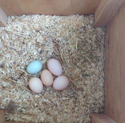 trading eggs